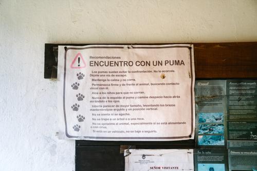 Puma encounter warnings