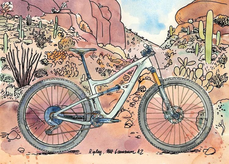 Ibis' New Ripley 29er Illustrated by Chris McNally