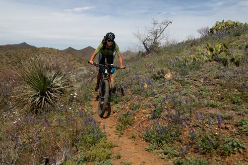 Lael rides past Arizona Lupine wildflowers. (Rugile Kaladyte)