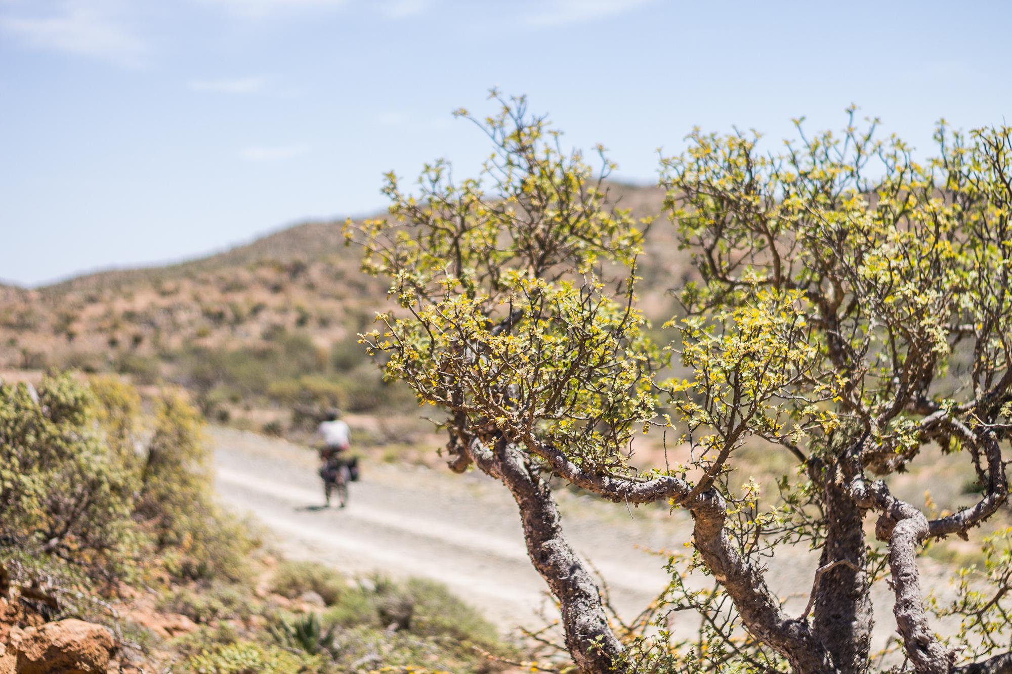 El Valle De Los Cirios-27