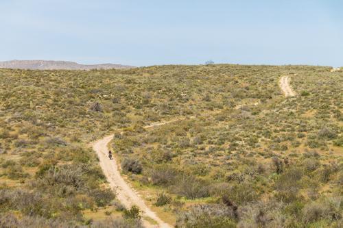 El Valle De Los Cirios-5