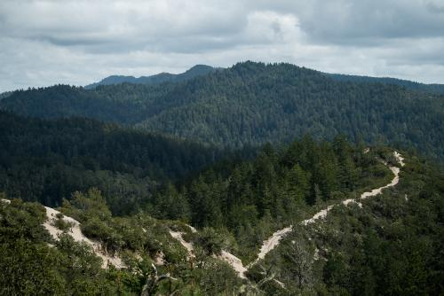 Riding the New Juliana Quincy in Big Basin
