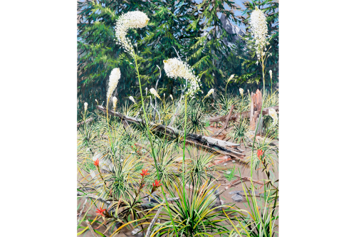 Subalpine Time to Shine 42in X 36in Oil on Linen