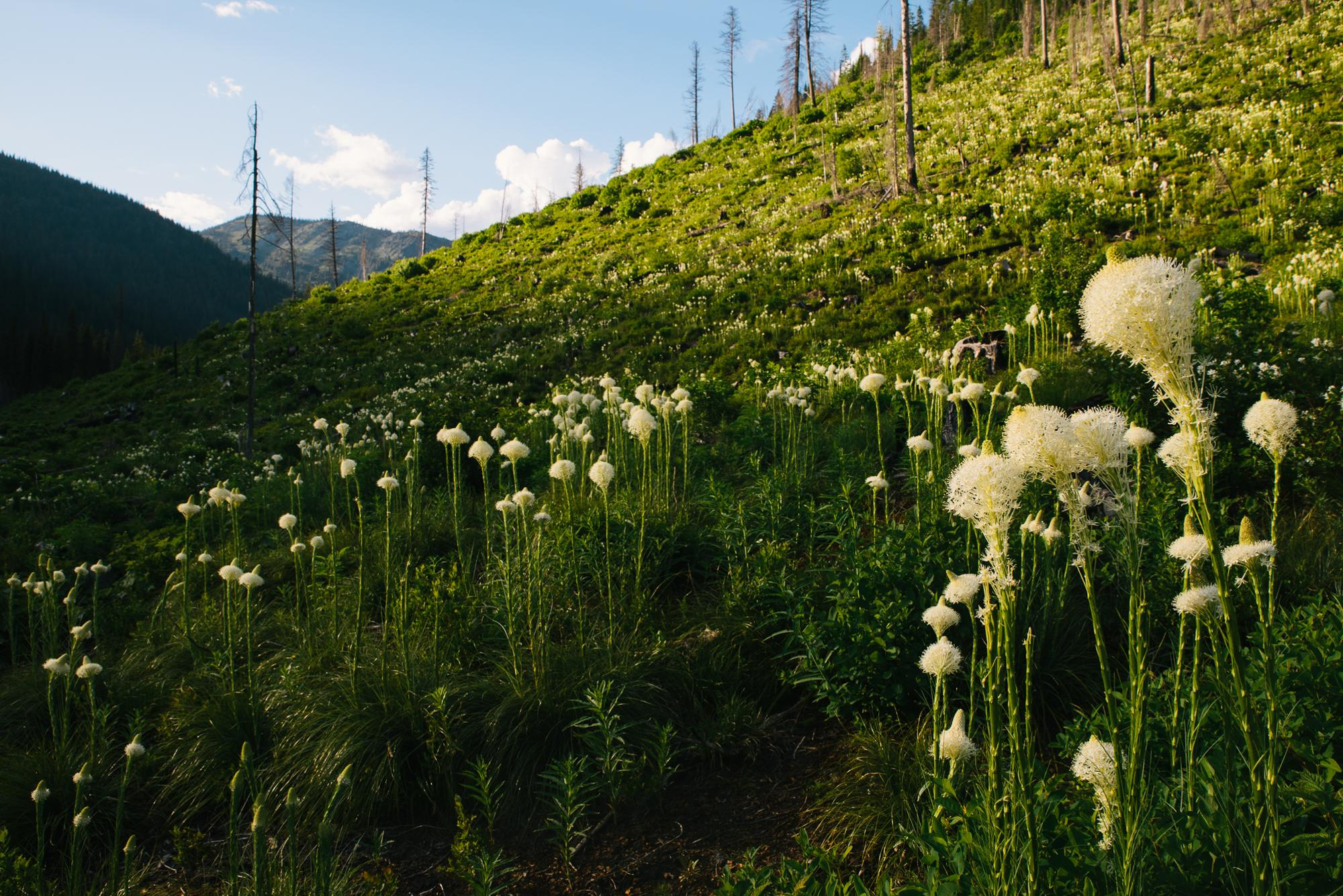 This Bear Grass field was unbelievable (Spencer Harding)