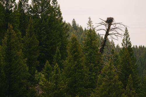 Osprey nest (Spencer Harding)