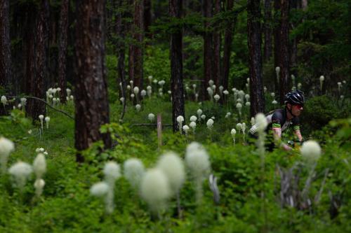 Steve Halligan passes bear grass near Clearwater Lake. (Rugile Kaladyte)