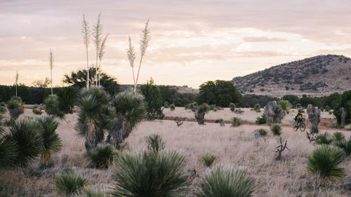 Blooming Yucca forest  (Spencer Harding)