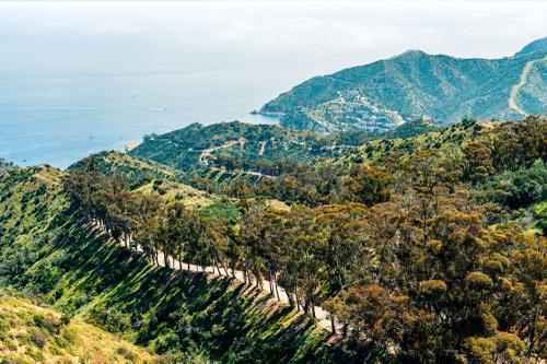 Eucalyptus trees line the climb