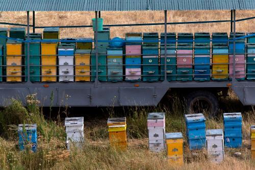 Beekeeping at the base of the last climb. (Rugile Kaladyte)