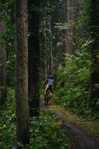 Cruising through the cedars
