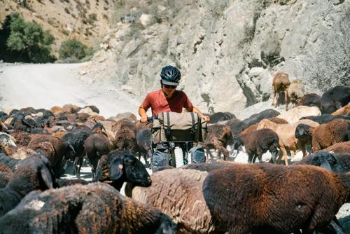 Typical Central Asian traffic