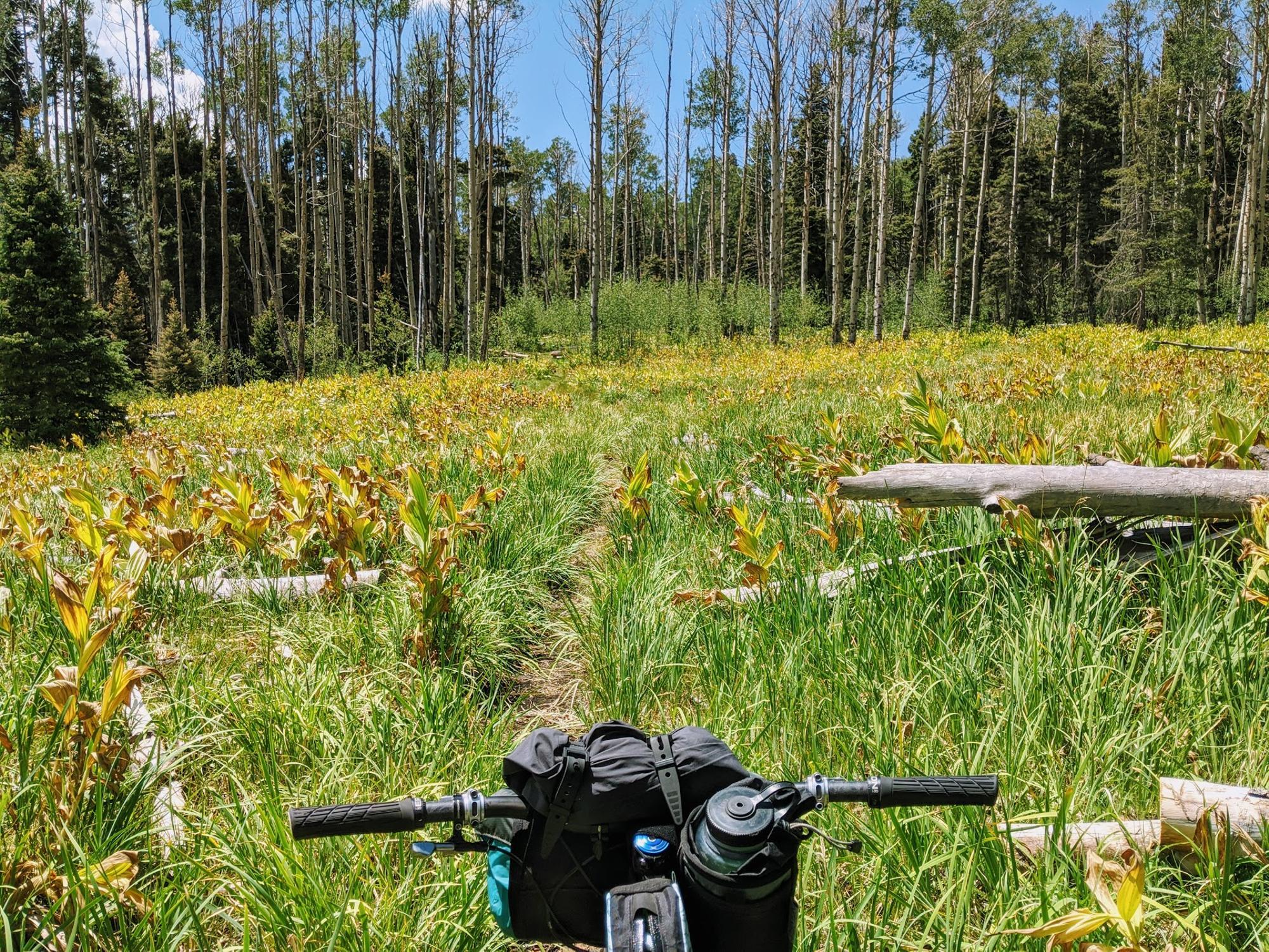 CDT through meadows
