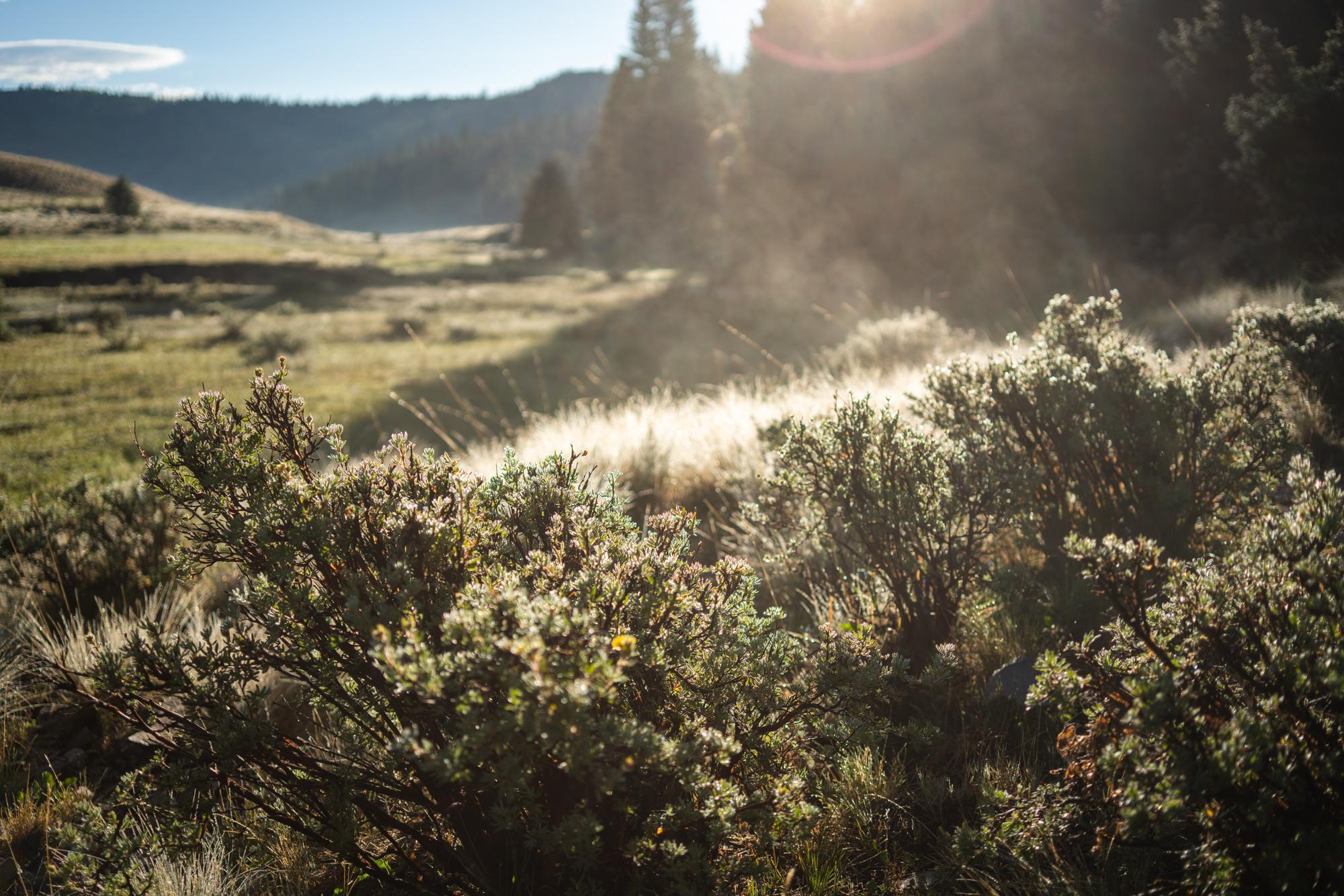 Morning steam rising