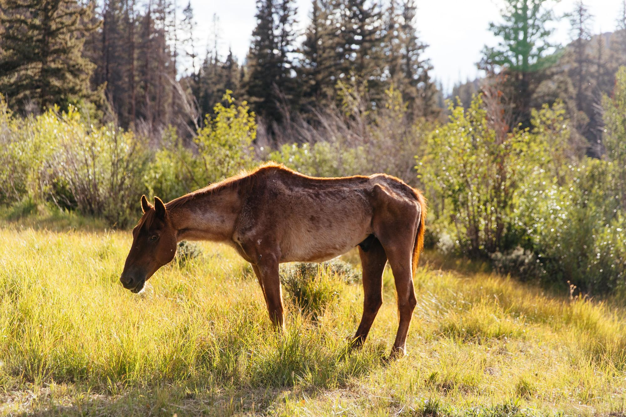 Someone from the Sierra Club left their horse...