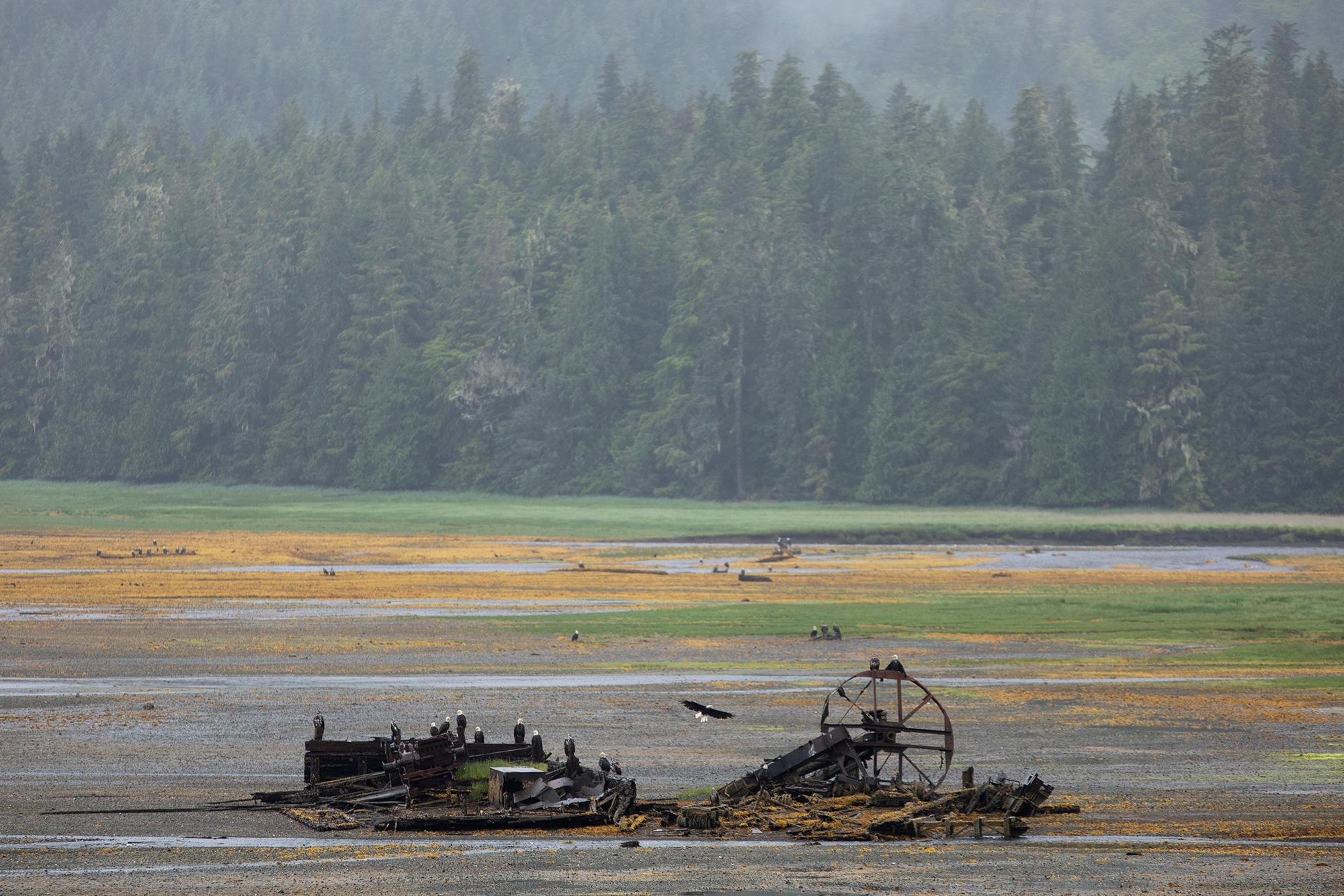 Prince of Wales, Alaska. (Rugile Kaladyte)