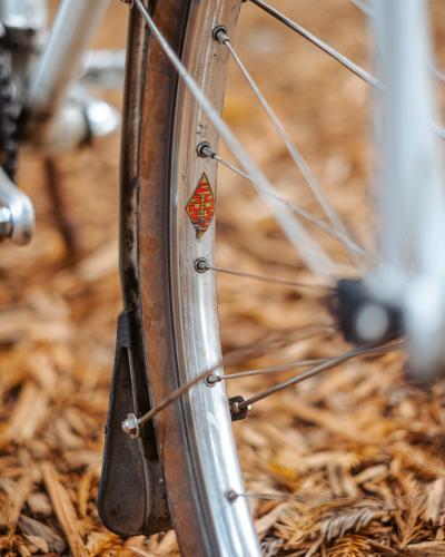 Sequoia-9248