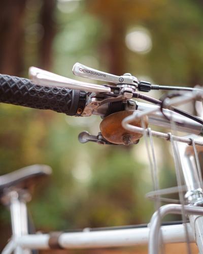 Sequoia-9254