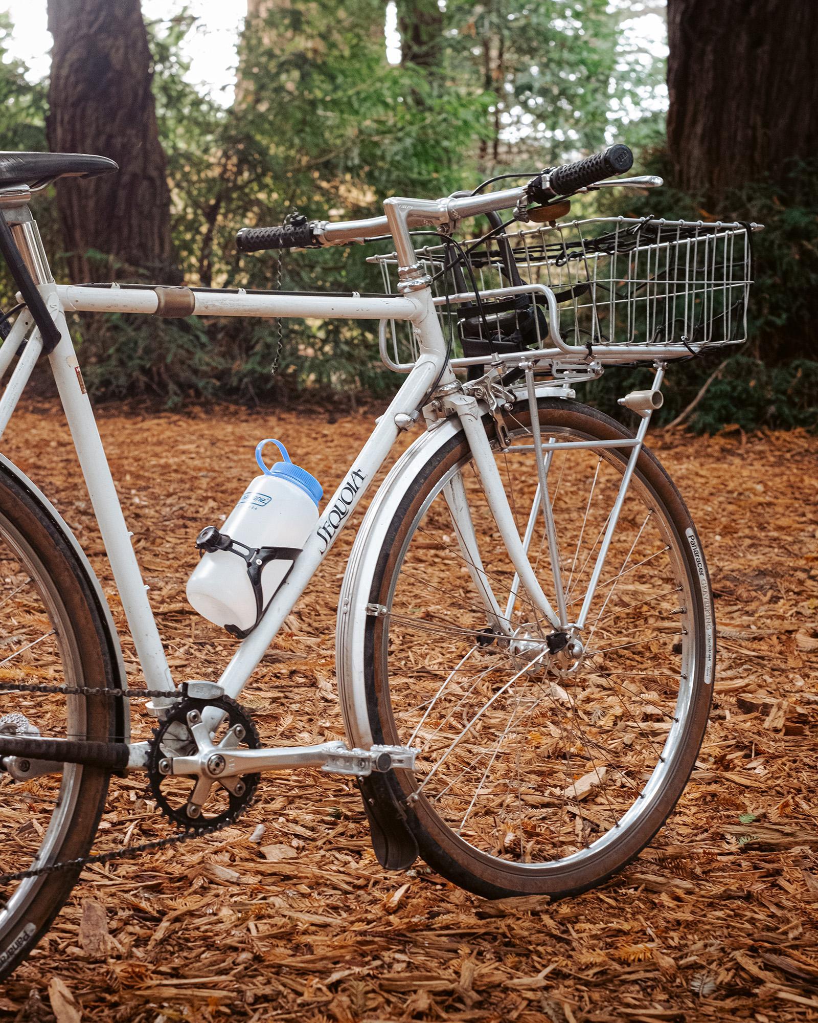 Sequoia-9296