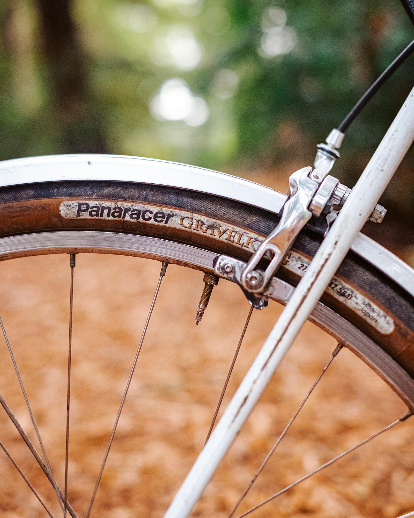 Sequoia-9331