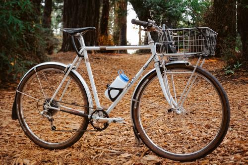 Sequoia-9357