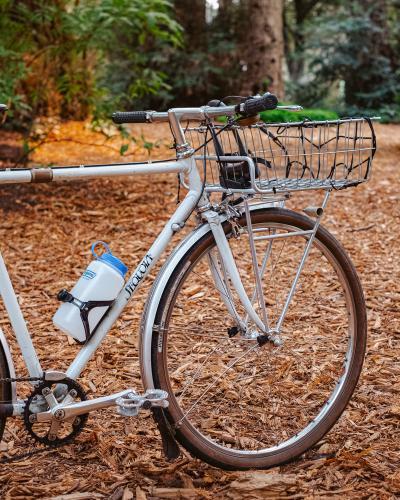 Sequoia-9359