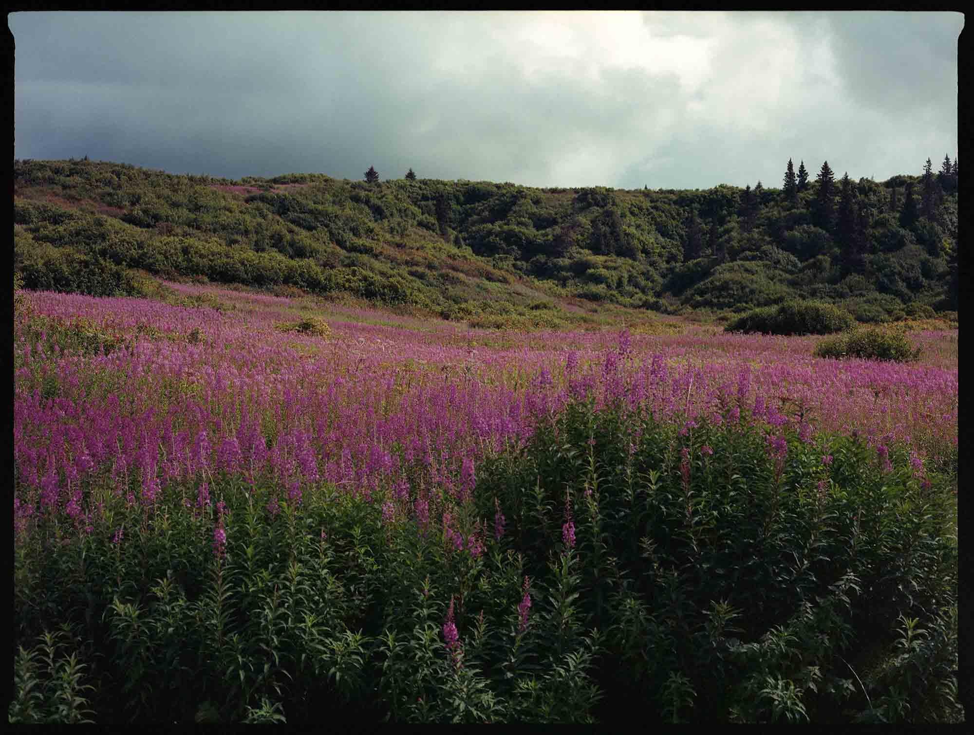 Alaska Roads Wrap Up — Rugile Kaladyte 15