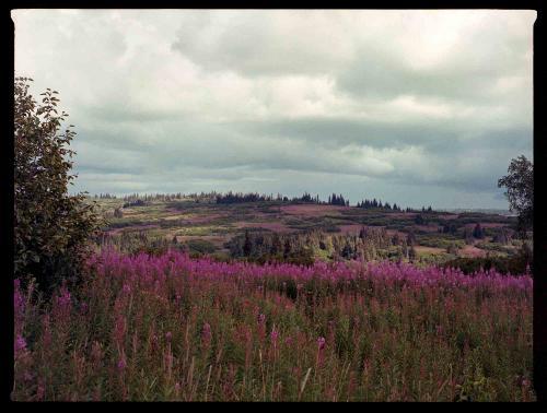 Alaska Roads Wrap Up — Rugile Kaladyte 16