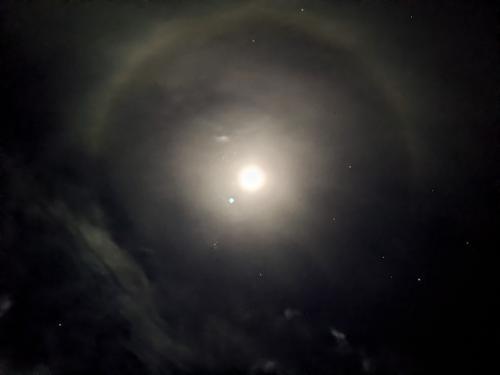 44. Moon Dog