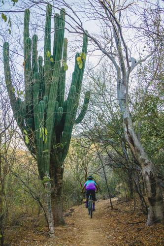 Between cacti and cypresses-13