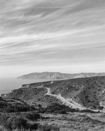 Skid Lizards Catalina