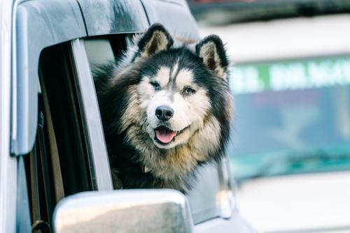 Doggo enjoying the mountain air