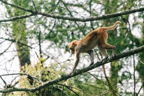 Monkeys wander the edge of Sauraha