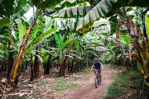 Banana Rd