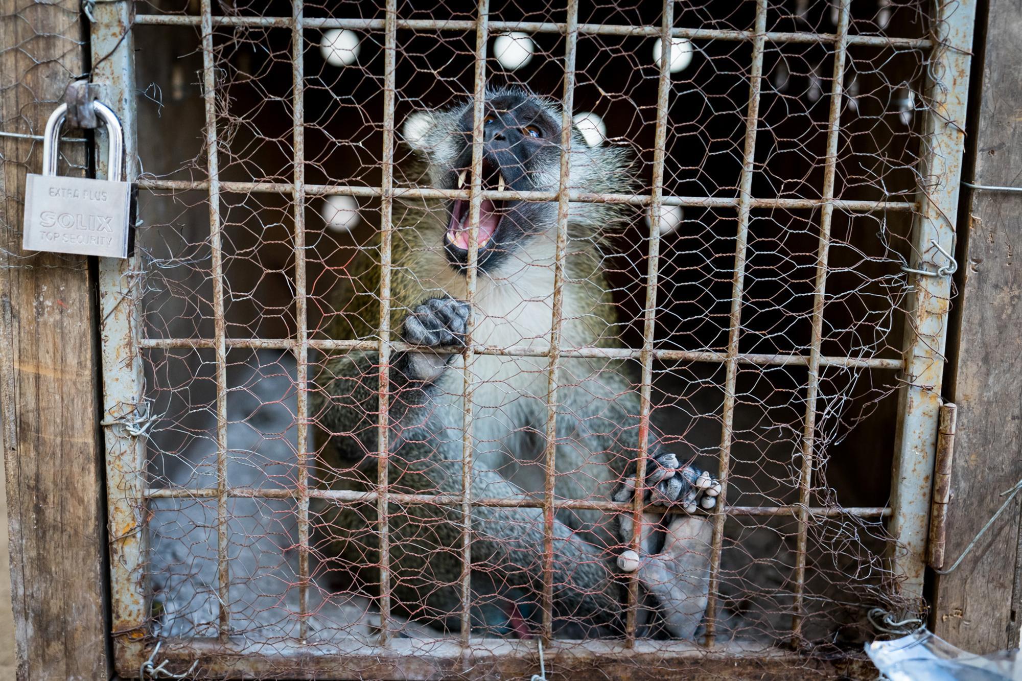 Enduimet monkey rehab