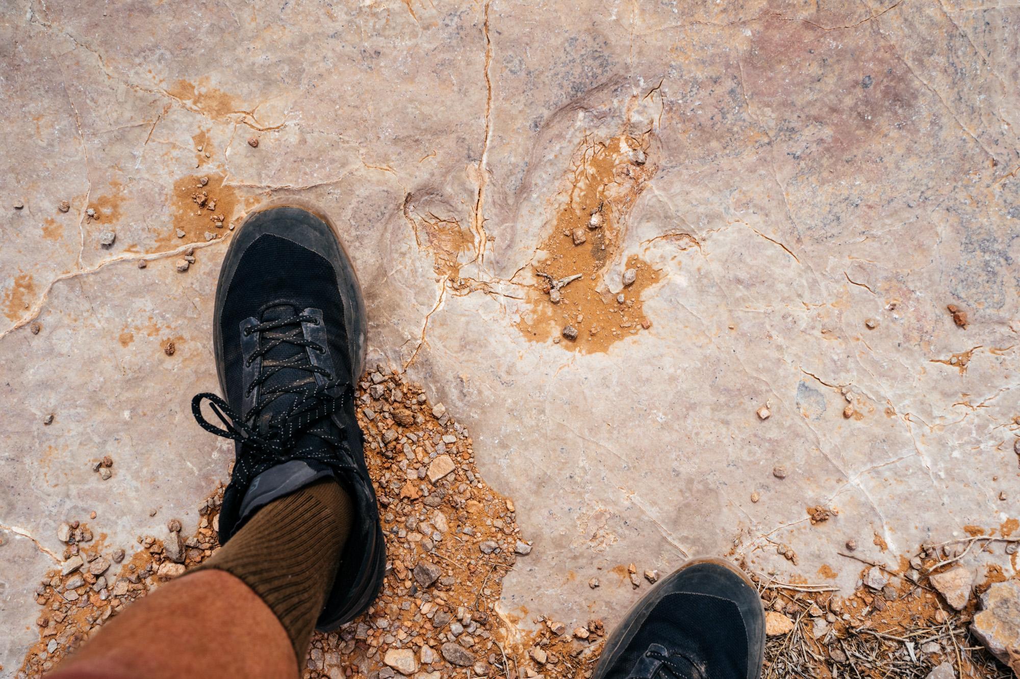 Dinosaur footprint