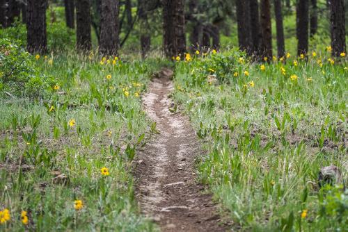 73_That Colorado Singletrack
