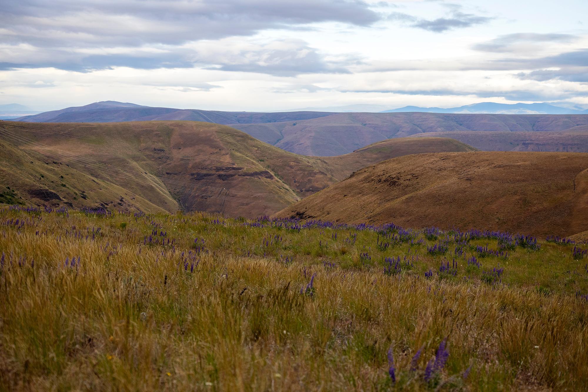 Nearing the Dalles. (Rugile Kaladyte)