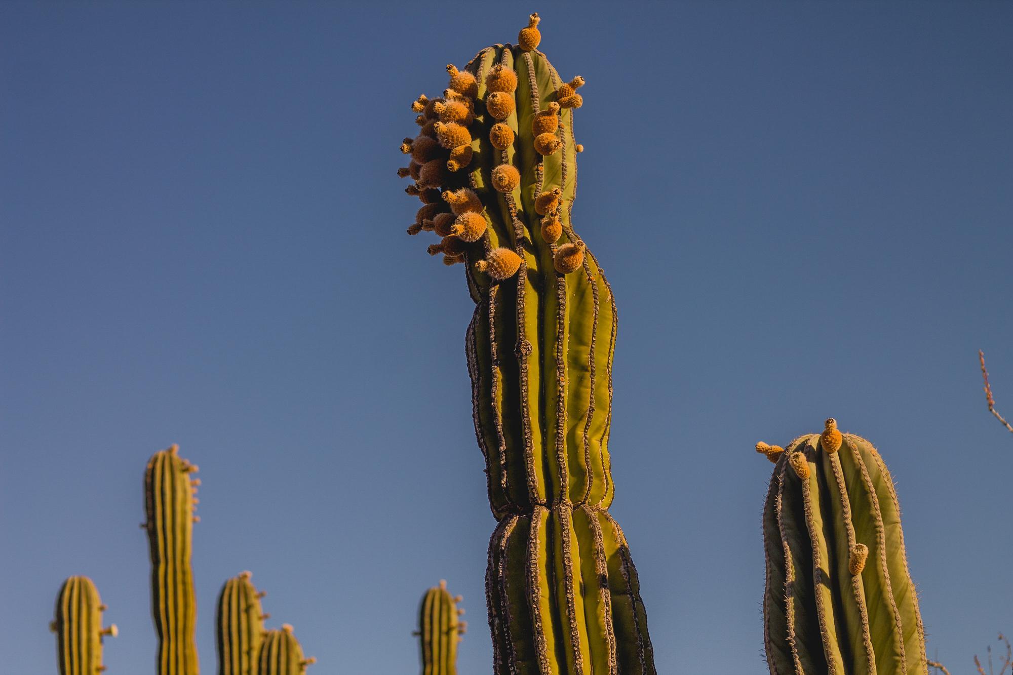 Tour Costa de Hermosillo-32