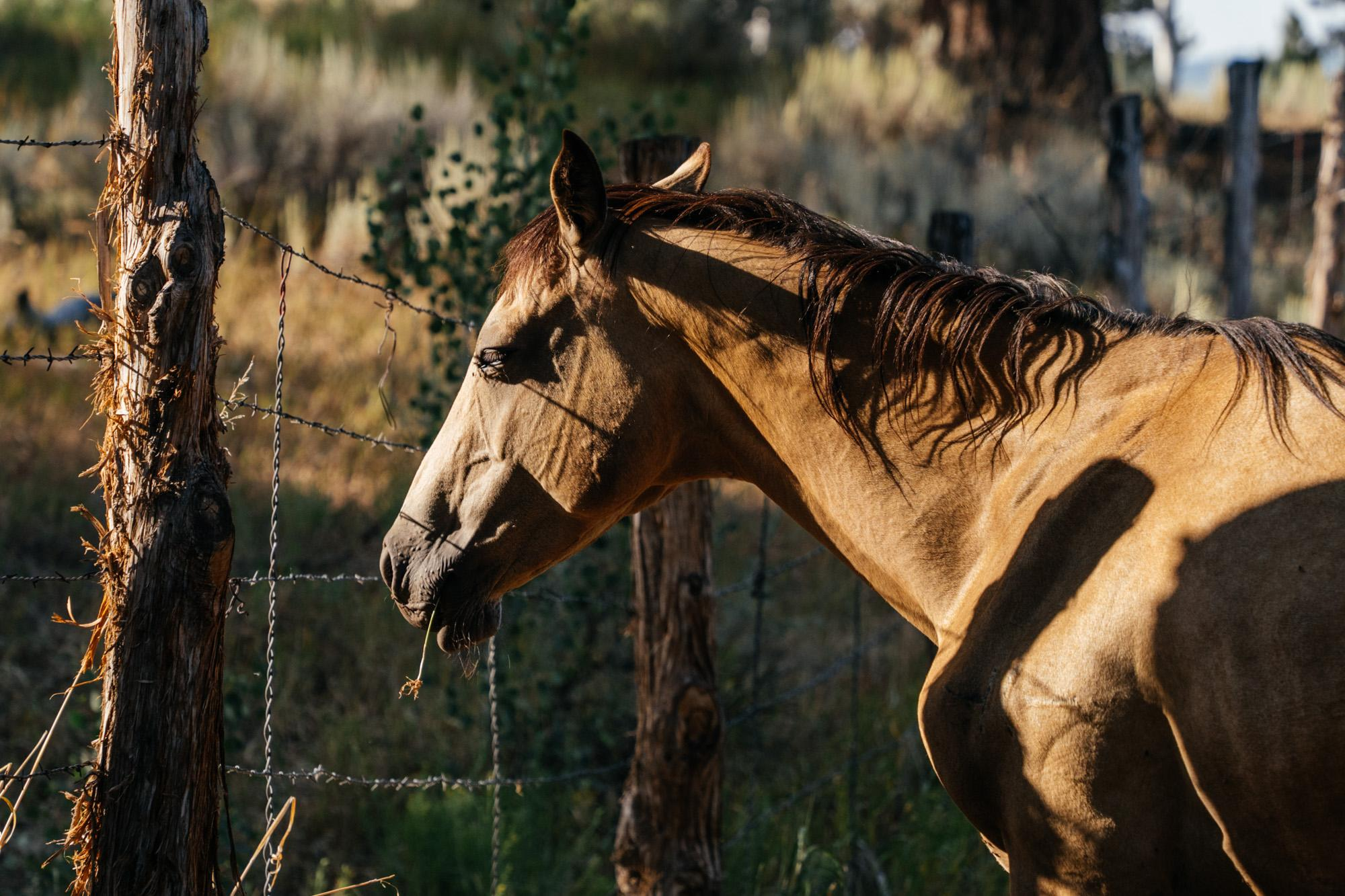 Sleeping while eating: a horse's tale