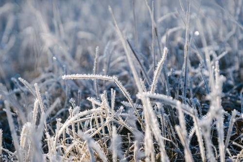 Crystalized grass