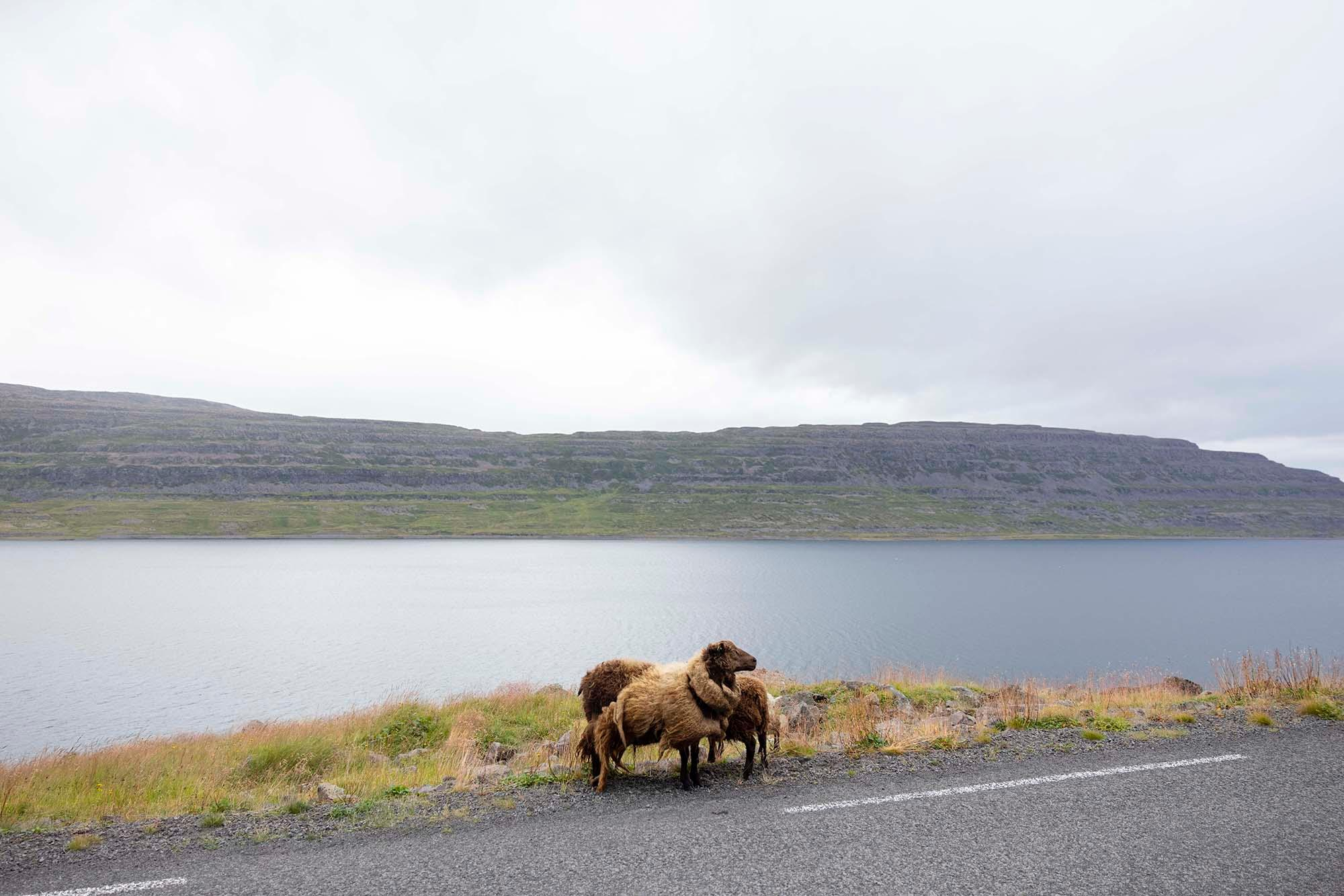 Westfjords Way — Rugile Kaladyte — Part One — 23