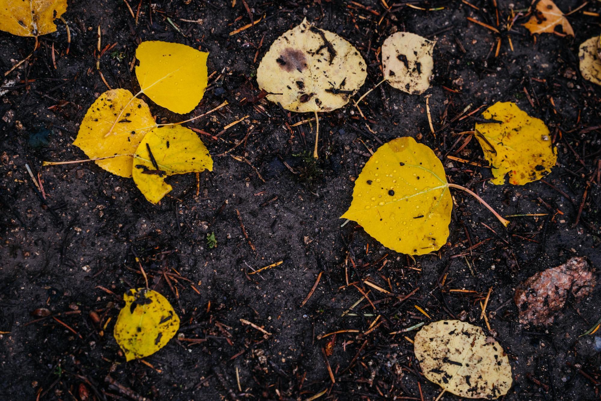 Falling for Fall - John Watson